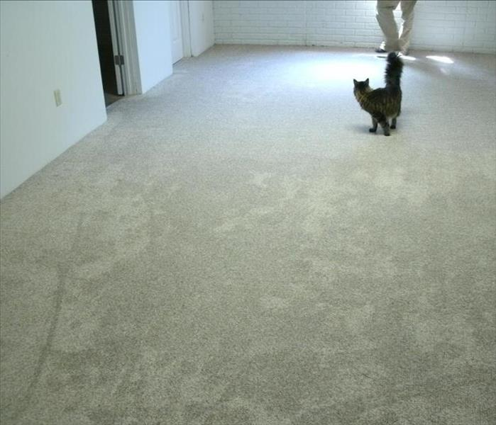 The cat don't seem to mind the wet carpet