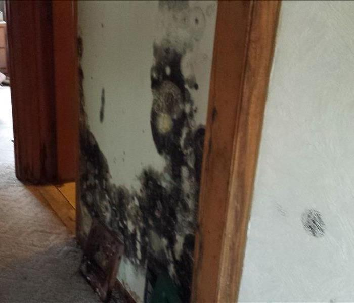 Mold will set in very quickly if you water damage is left unrepaired