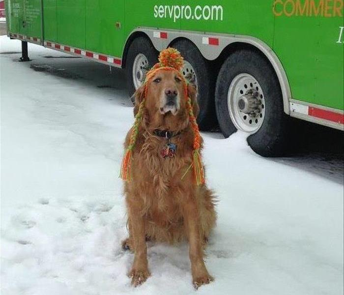 Our mascot, Blaze, sitting in the snow with a SERVPRO truck in the background