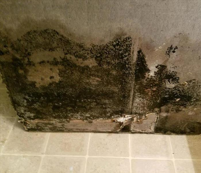 Mold Remediation There are many places Mold can appear in your Sanford home