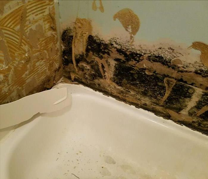 Mold Remediation Bathrooms can be a huge source of mold